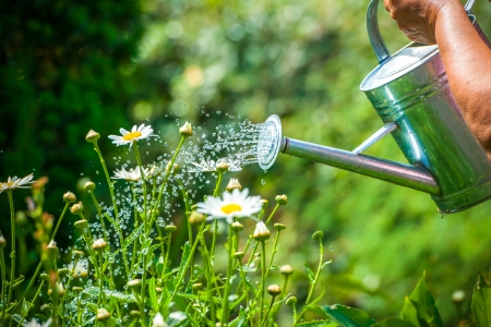 water garden: Watering flowers with a watering can