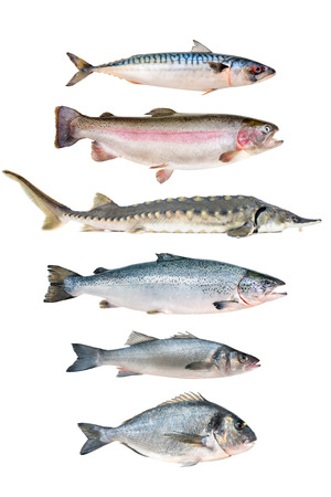 fish collection isolated on the white background photo
