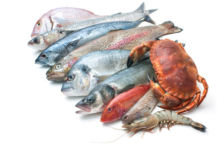 Fresh catch of fish and other seafood isolated on white background photo