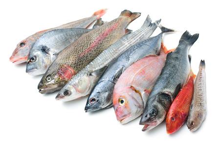 흰색 배경에 고립 된 물고기의 신선한 캐치