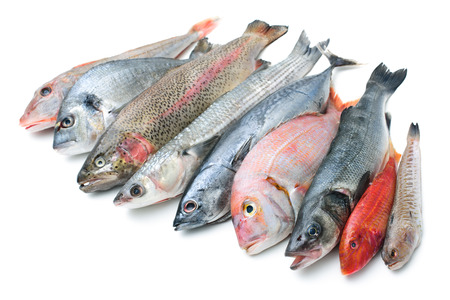 Fresh catch of fish  isolated on white background photo
