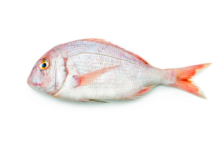 fish tail: pink sea bream isolated on white background