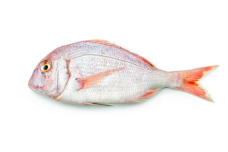 escamas de peces: rosado de besugo aislado sobre fondo blanco Foto de archivo
