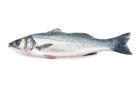 Seabass, Dicentrarchus labrax. Isolated on the white background