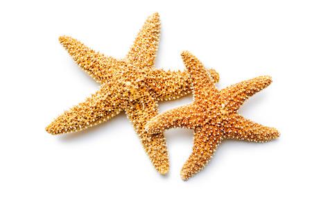estrella de mar: estrellas de mar de color rojo aisladas sobre fondo blanco Foto de archivo