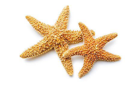 red sea stars isolated on white background Reklamní fotografie
