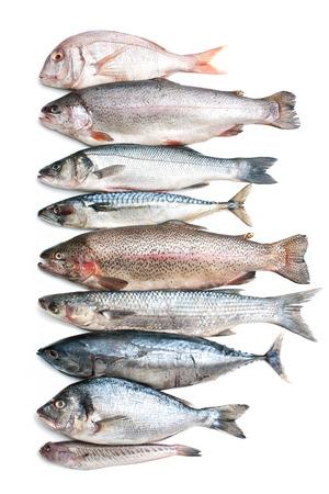 atún: Colección de los pescados de mar aislado en el fondo blanco Foto de archivo