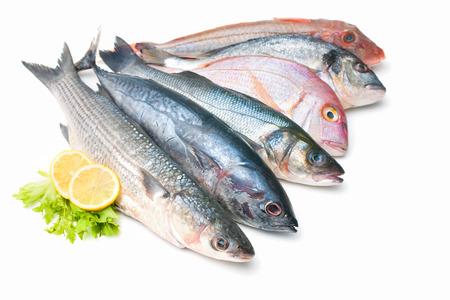 Verse vangst van vissen die op wit Stockfoto