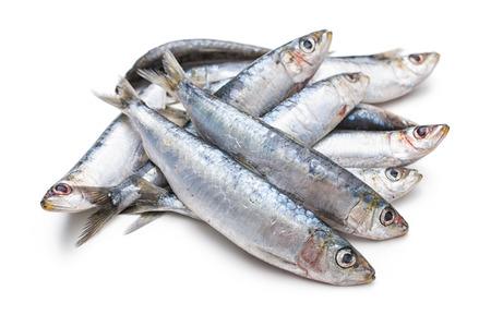 sardine: Fresh sardine crude isolati su sfondo bianco Archivio Fotografico