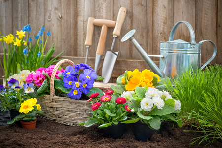 Gardeners hands planting flowers in pot with dirt or soil at back yard photo