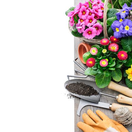 Tuingereedschap en bloemen geïsoleerd op wit met een kopie ruimte