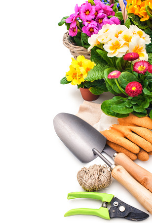 primulas: Gardening tools and flowers isolated on white with copy space