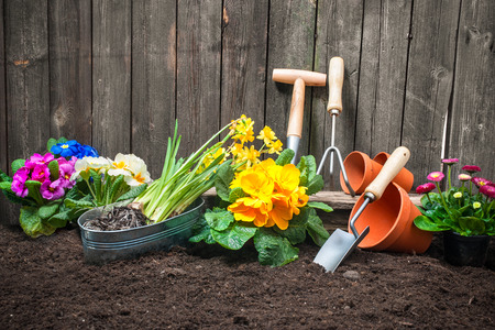 Planting flowers in pot with dirt or soil at back yard photo