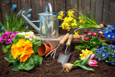 garden tool: Planting flowers in pot with dirt or soil at back yard