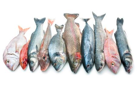 Retén fresco de los peces aislados en el fondo blanco