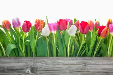 あなたのメッセージをコピー スペースと春のチューリップの花