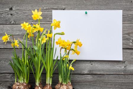 Bericht en het voorjaar narcissen tegen houten achtergrond