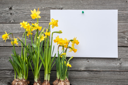 Message and spring daffodils against wooden background Banco de Imagens - 26782230