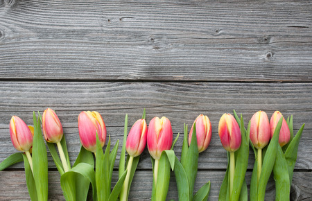 space for copy: fresh tulips arranged on old wooden background with copy space for your message Stock Photo