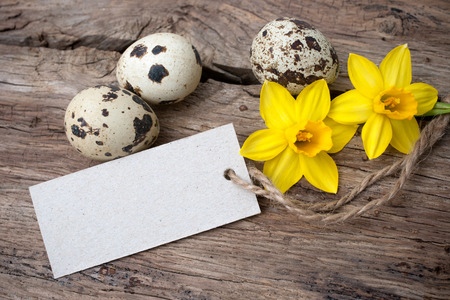 Quail eggs and  daffodils with a  tag  on wooden background photo