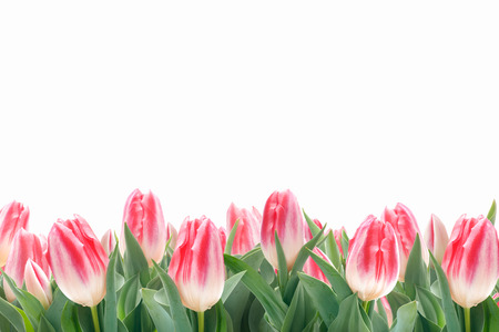 Spring tulips flowers in green grass isolated on white background photo