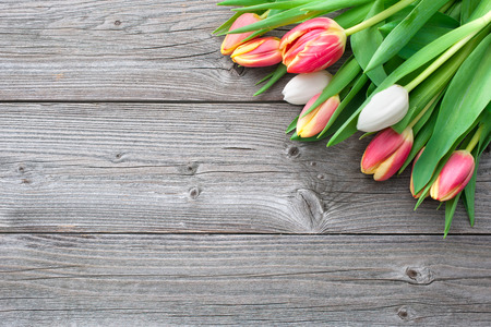 fresh tulips with copy space on wooden background