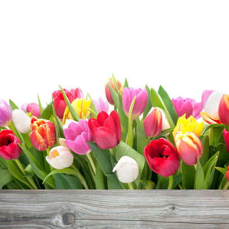 spring tulips flowers with copy space for your message Imagens