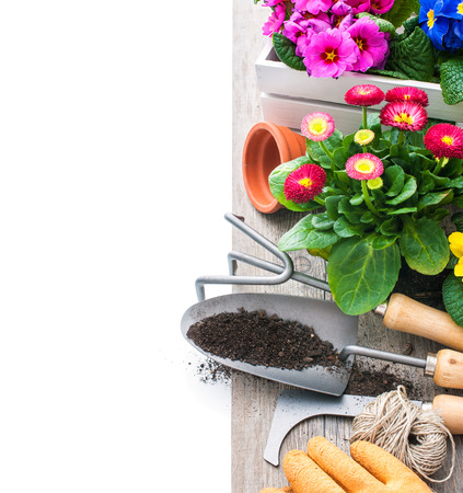 garden tool: Gardening tools and flowers isolated on white with copy space