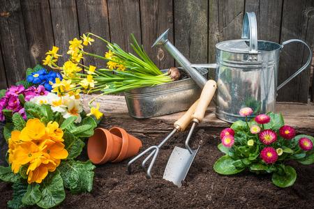 Het planten van bloemen in pot met vuil of bodem op achtertuin