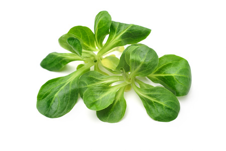 Corn salad leaves isolated on white. Valerianella locusta, lambs lettuce photo