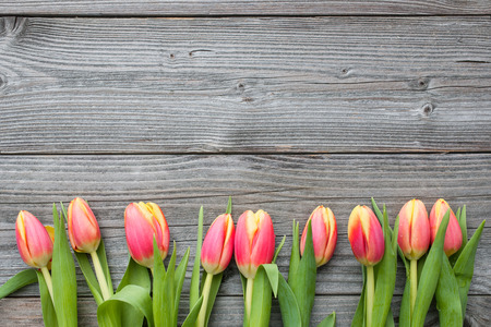 fresh tulips arranged on old wooden background with copy space for your message Stock Photo