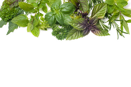 medical herbs: Fresh green herbs isolated over white background