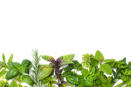 Fresh green herbs isolated over white background photo