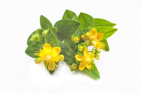 白い背景上に分離されて共通の聖 Johnswort 花