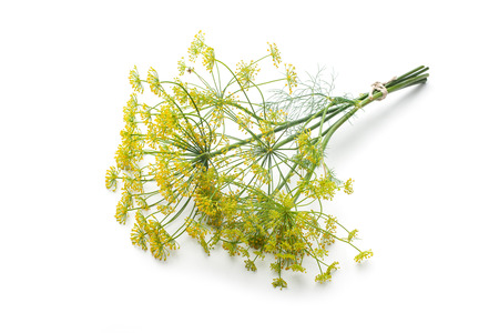 Bunch of fresh dill with flower isolated on white Imagens
