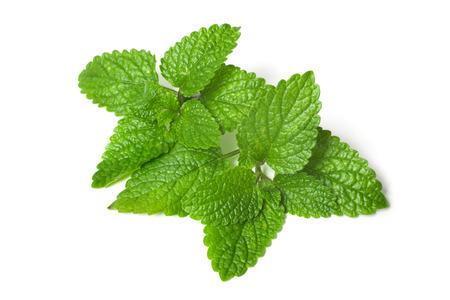 멜리사의 신선한 녹색 잎 흰색 배경에 고립 스톡 콘텐츠