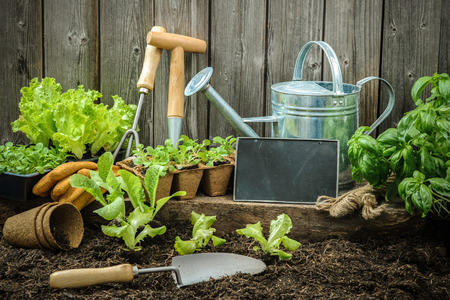 vegetable plants: Seedlings of lettuce with gardening tools outside the potting shed Stock Photo