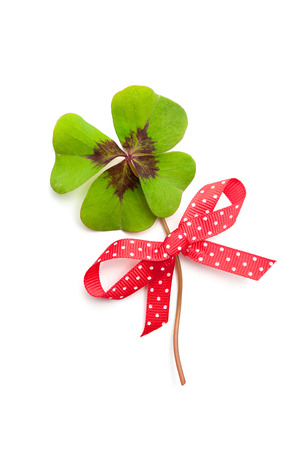 fourleaved: clover leaf with red ribbon isolated on white background