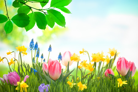 colorful spring flowers with green grass outdoors Stock Photo