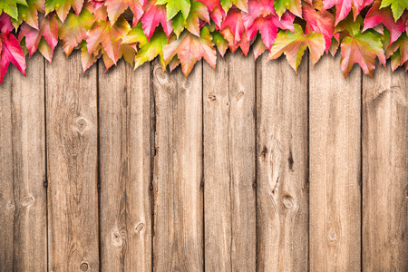 Autumn leaves over old wooden background with copy space photo