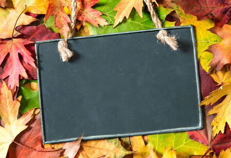 Chalkboard and autumn maple leaves on background photo