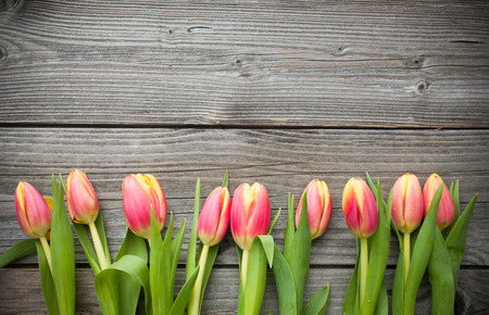 anniversary flower: fresh tulips arranged on old wooden background with copy space for your message Stock Photo