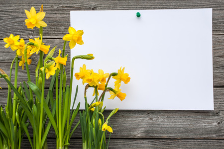 bulbous: Message and spring daffodils against wooden background