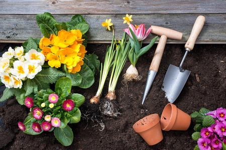 Das Einpflanzen Blumen im Topf mit Schmutz oder Boden auf Hinterhof Standard-Bild - 35806706