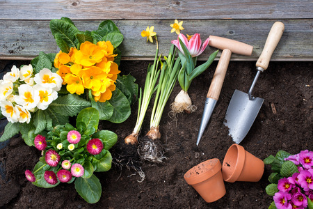 dirt: Planting flowers in pot with dirt or soil at back yard