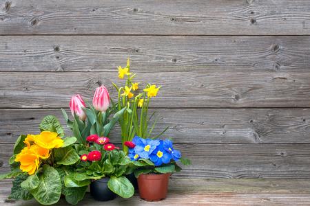 jarní květiny v květináčích na dřevěném podkladu. Tulipány, prvosenky, narcisy Reklamní fotografie