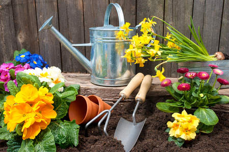 Planting flowers in pot with dirt or soil at back yard Stock Photo - 35806776