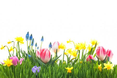 春の花の白い背景で隔離の緑の草