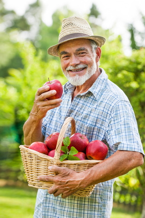 Senior holds a basket of ripe apples in the garden Stock Photo