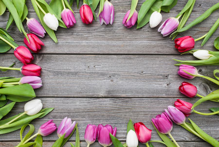 easter flowers: Frame of fresh tulips arranged on old wooden background Stock Photo